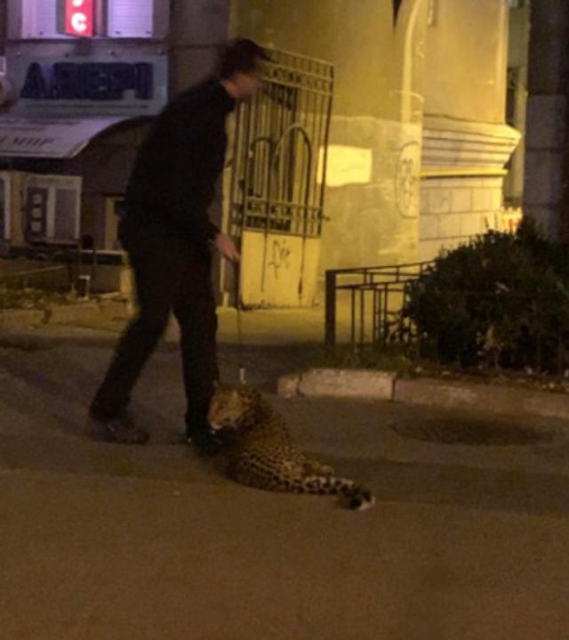 У Києві чоловік вигулював леопарда: фотофакт - фото 368547