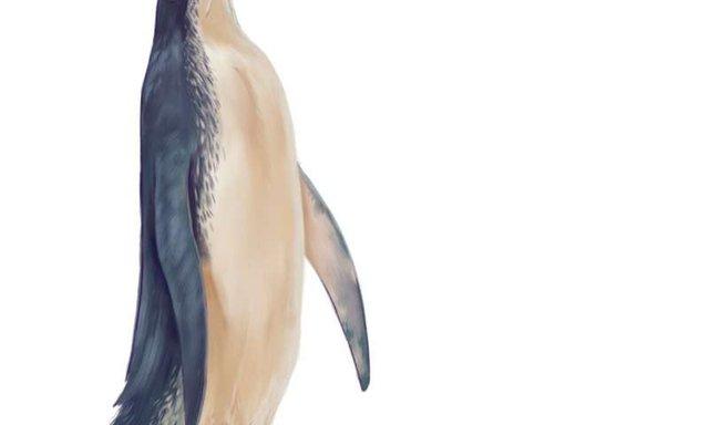 У Новій Зеландії знайшли останки гігантського пінгвіна: як людина - фото 368586