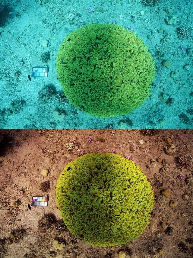 Океанограф зі США робить підводні знімки без води - фото 368929