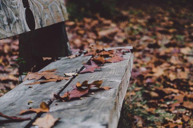 Нічні заморозки у листопаді посиляться - фото 369118