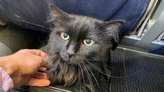 Водило в безвісти життя: кіт повернувся додому після 5 років подорожей - фото 369482