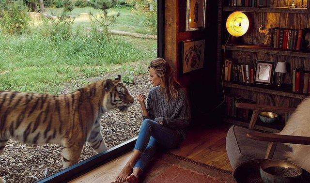 Під наглядом диких звірів: у Великобританії відкрили незвичайний готель - фото 369990