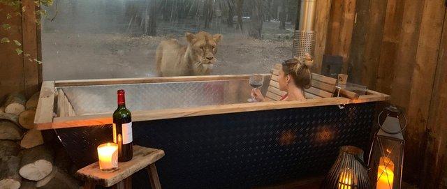 Під наглядом диких звірів: у Великобританії відкрили незвичайний готель - фото 369992