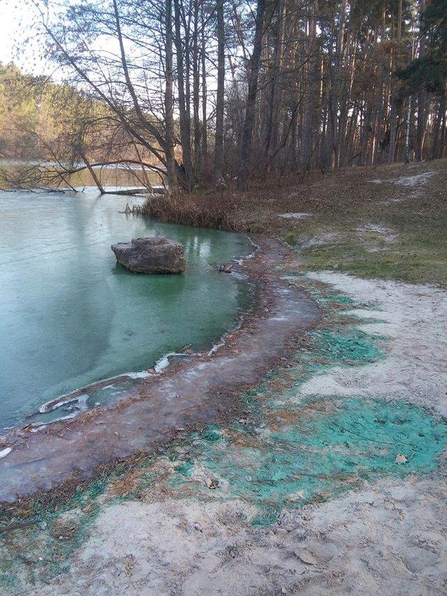 Біля Києва позеленіло озеро: вражаючі фото - фото 370495