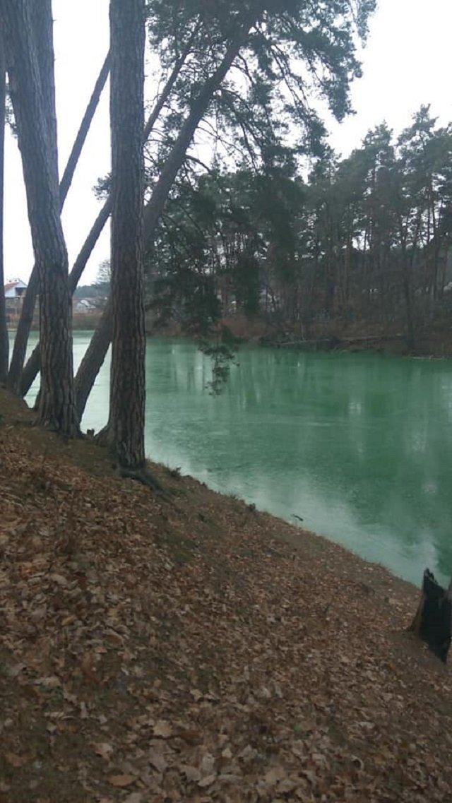 Біля Києва позеленіло озеро: вражаючі фото - фото 370499