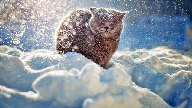 Зима  - фото 370766