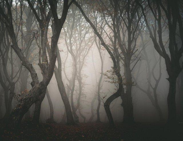Ці таємничі і зловісні ліси розбурхують уяву - фото 371252