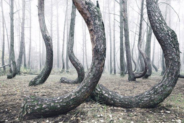 Ці таємничі і зловісні ліси розбурхують уяву - фото 371254