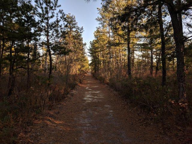 Ці таємничі і зловісні ліси розбурхують уяву - фото 371255