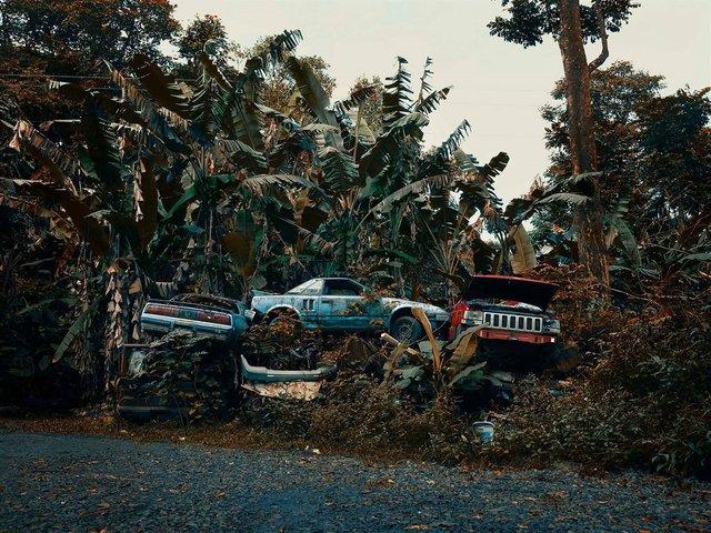 Фотограф знайшов у гавайських лісах занедбані авто: ефектні кадри - фото 371261