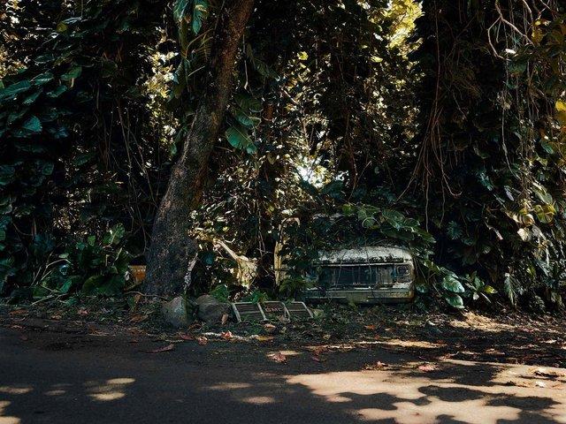 Фотограф знайшов у гавайських лісах занедбані авто: ефектні кадри - фото 371263