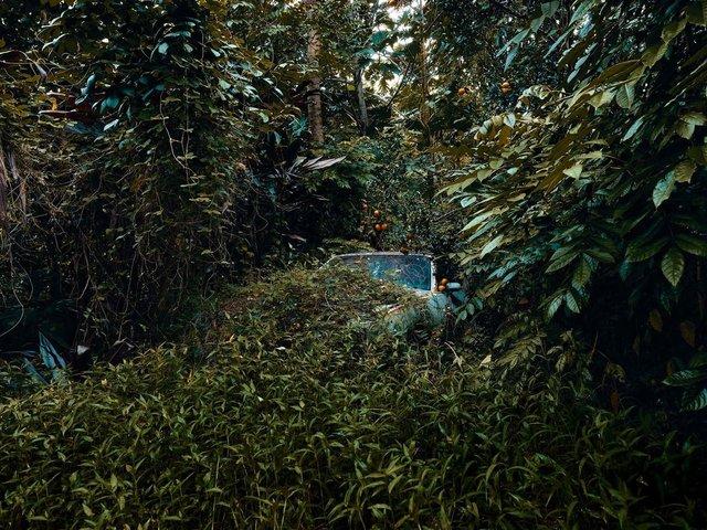 Фотограф знайшов у гавайських лісах занедбані авто: ефектні кадри - фото 371264