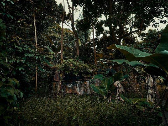 Фотограф знайшов у гавайських лісах занедбані авто: ефектні кадри - фото 371266