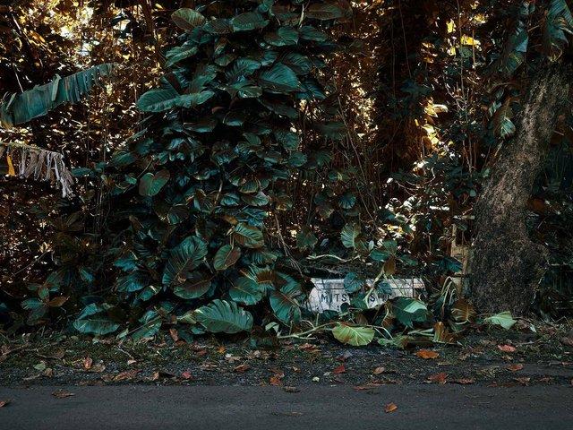Фотограф знайшов у гавайських лісах занедбані авто: ефектні кадри - фото 371267