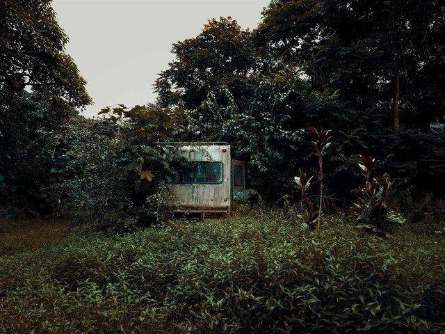 Фотограф знайшов у гавайських лісах занедбані авто: ефектні кадри - фото 371268