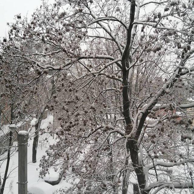 Перший сніг в Україні: добірка найкращих фото з Instagram - фото 371826