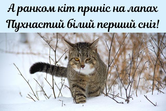 З першим снігом! Вітальні картинки, листівки і фото з початком зими - фото 371850