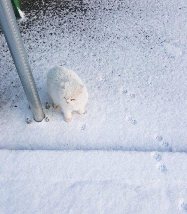 Емоції тварин, які вперше побачили сніг: епічні фото - фото 372289