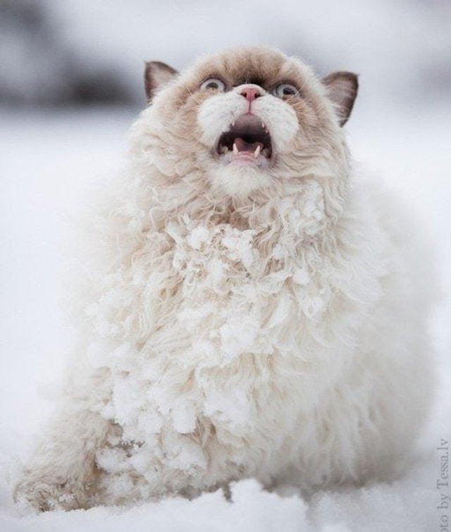 Емоції тварин, які вперше побачили сніг: епічні фото - фото 372290