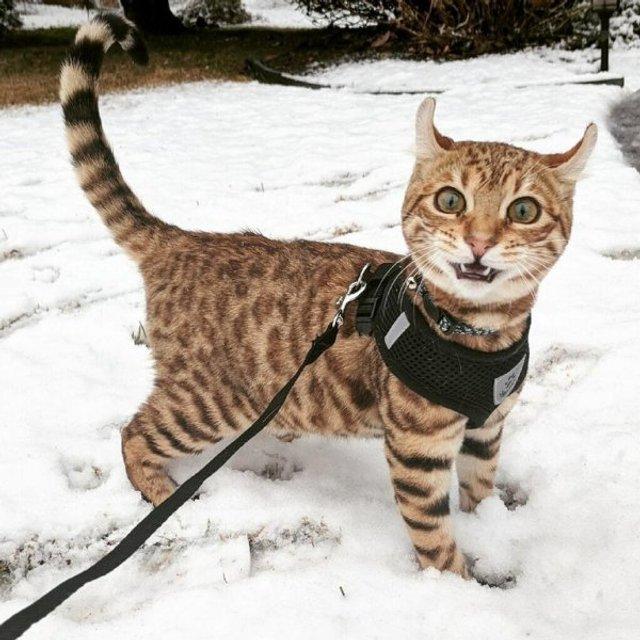 Емоції тварин, які вперше побачили сніг: епічні фото - фото 372294