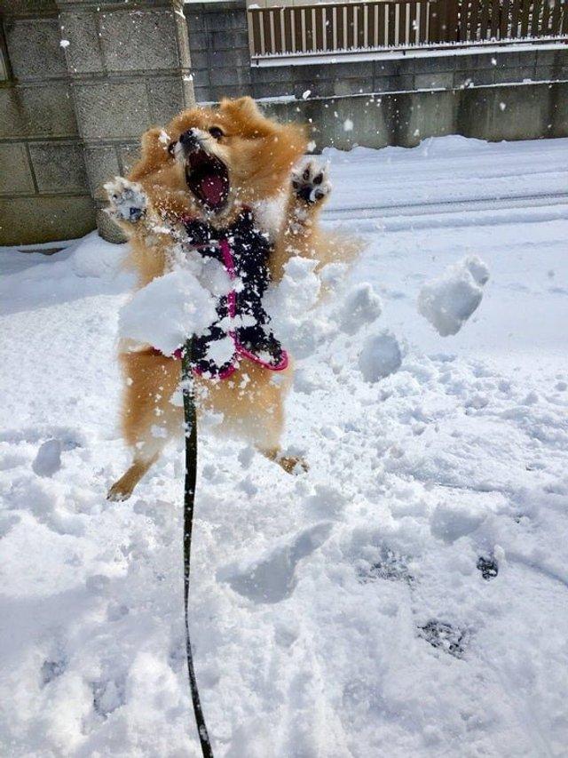 Емоції тварин, які вперше побачили сніг: епічні фото - фото 372297