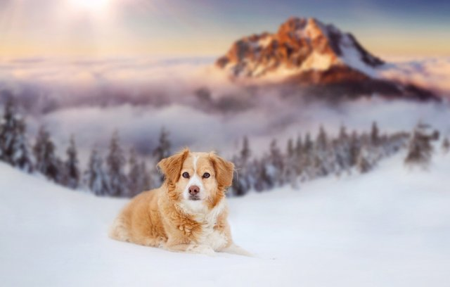 Зима  - фото 372352