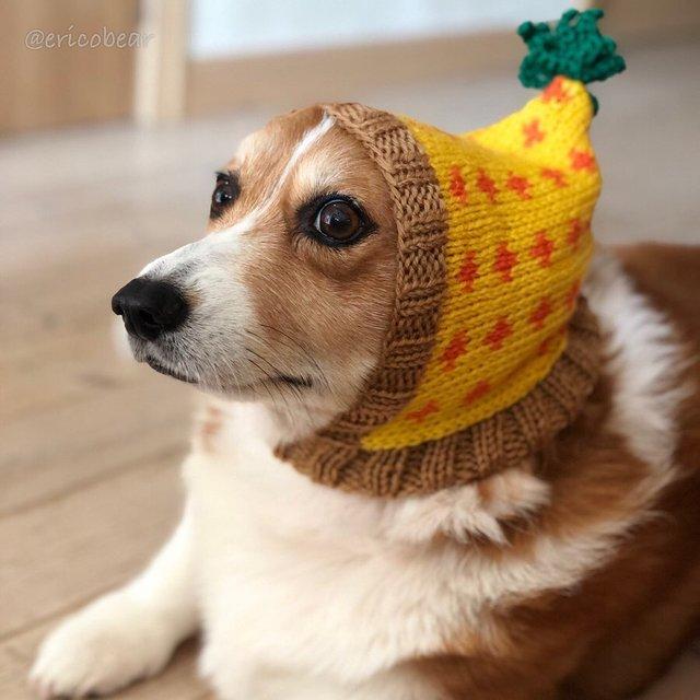 Цей пес коргі став зіркою мережі, змусивши посміхатися мільйони: кумедні фото - фото 372513