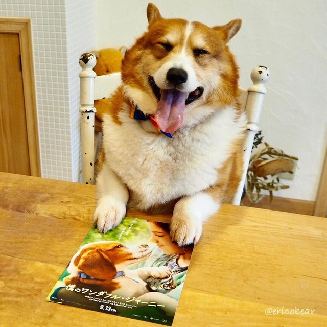 Цей пес коргі став зіркою мережі, змусивши посміхатися мільйони: кумедні фото - фото 372518
