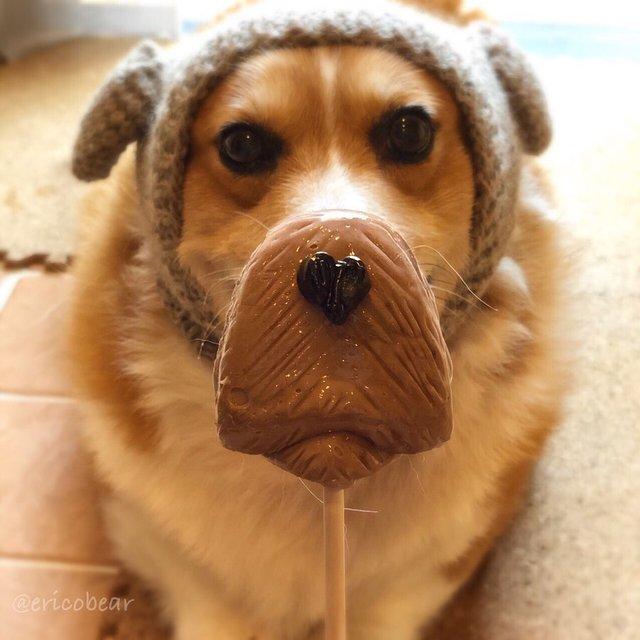 Цей пес коргі став зіркою мережі, змусивши посміхатися мільйони: кумедні фото - фото 372519