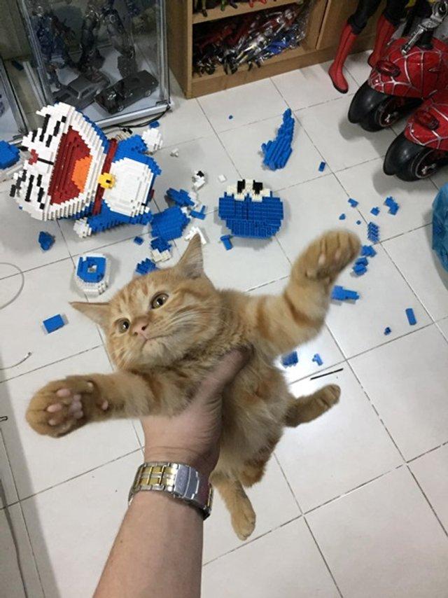 Кіт-бешкетник зламав фігуру з 2432 деталей конструктора - фото 377816