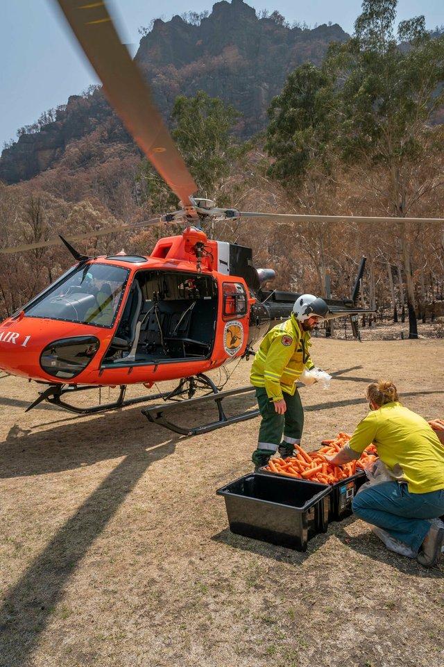 В Австралії з повітря скинули тонни моркви для тварин: фоторепортаж - фото 379296