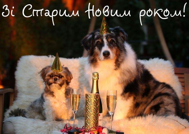 Картинки зі Старим Новим роком 2020: гарні листівки і прикольні відкритки - фото 379378