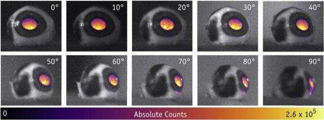 Чому світяться очі: феномен вперше зняли на фото - фото 379571