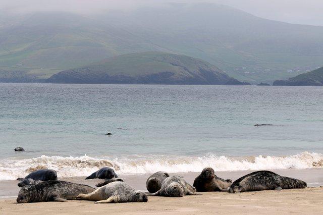 Ірландський острів шукає двох людей, які безкоштовно будуть на ньому жити - фото 381288