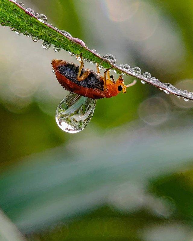 Індійський фотограф показує незвичайну красу природи за допомогою смартфону - фото 381410