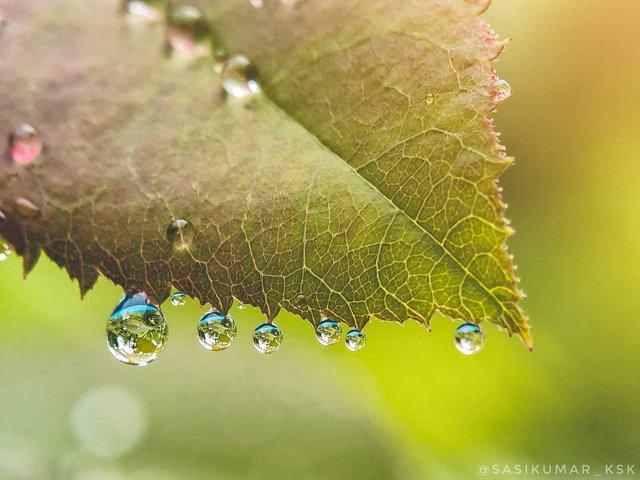 Індійський фотограф показує незвичайну красу природи за допомогою смартфону - фото 381412