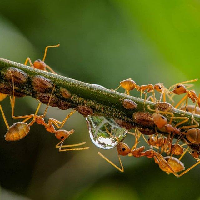 Індійський фотограф показує незвичайну красу природи за допомогою смартфону - фото 381413