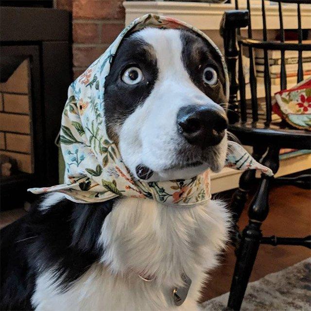 Залишили в бабусі: фото собак в хустинах, які змусять усміхнутись - фото 382227