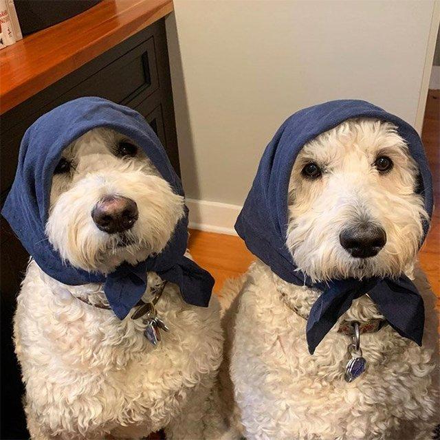 Залишили в бабусі: фото собак в хустинах, які змусять усміхнутись - фото 382231