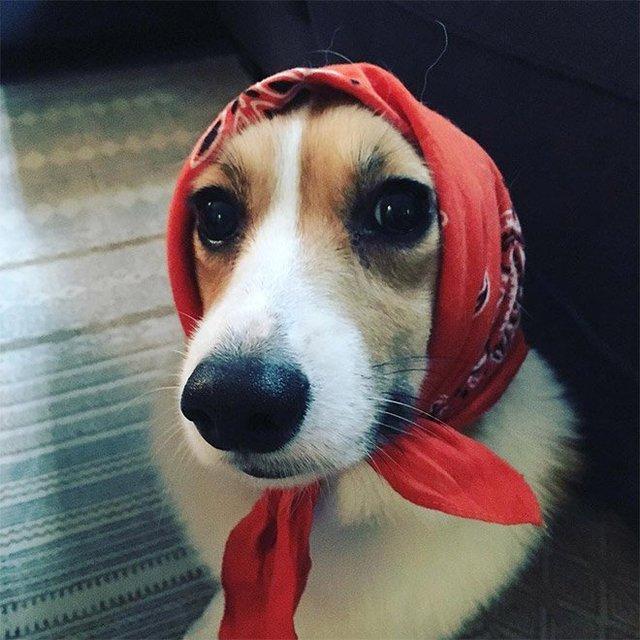 Залишили в бабусі: фото собак в хустинах, які змусять усміхнутись - фото 382233