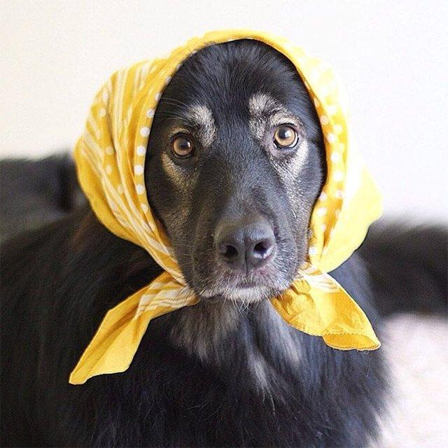 Залишили в бабусі: фото собак в хустинах, які змусять усміхнутись - фото 382235