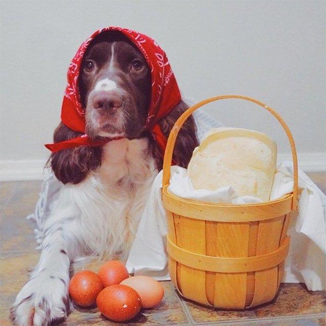 Залишили в бабусі: фото собак в хустинах, які змусять усміхнутись - фото 382236