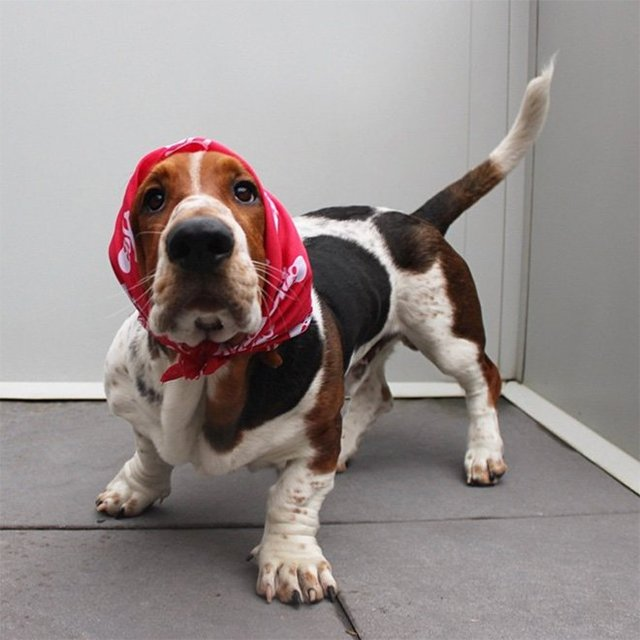 Залишили в бабусі: фото собак в хустинах, які змусять усміхнутись - фото 382237
