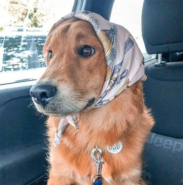 Залишили в бабусі: фото собак в хустинах, які змусять усміхнутись - фото 382240