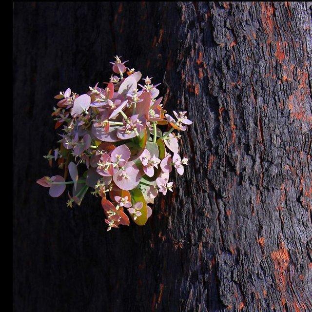 nature_australian - фото 382881