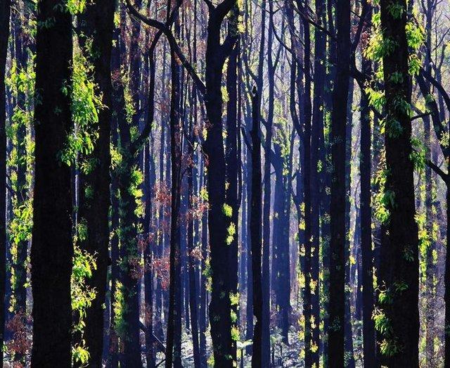 nature_australian - фото 382884