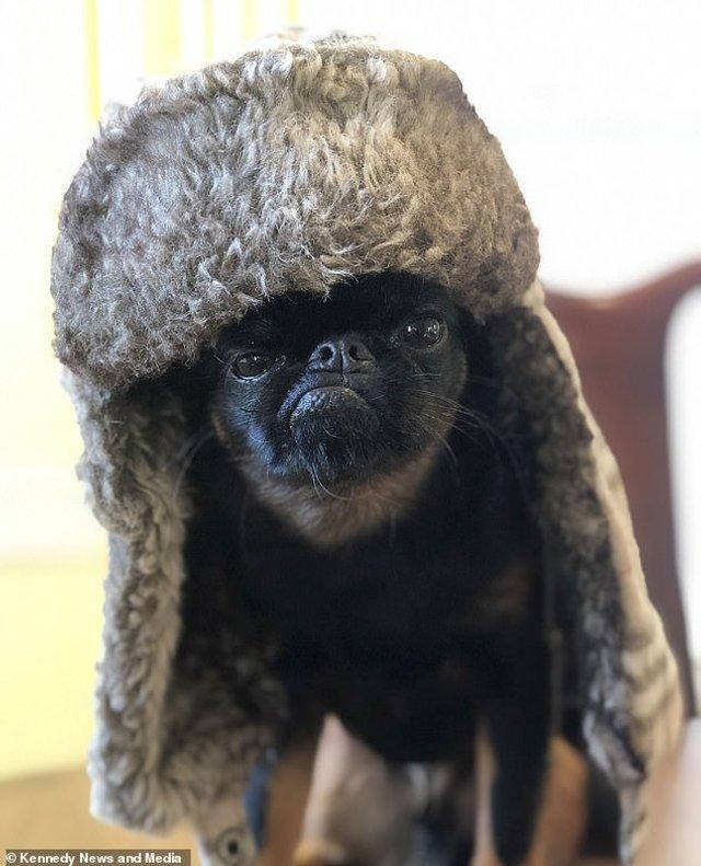 Мережу розвеселив найсуворіший пес у світі: кумедні фото - фото 383538