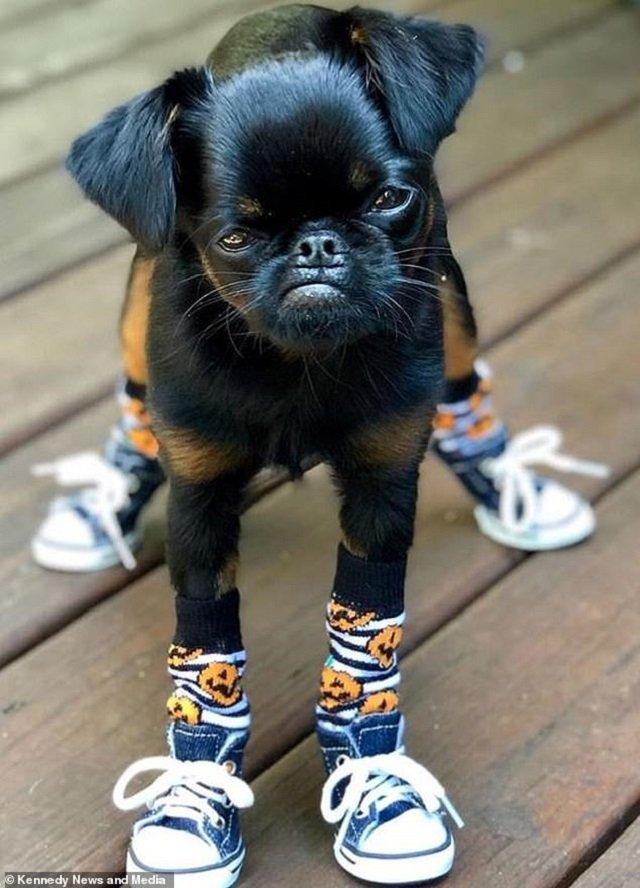 Мережу розвеселив найсуворіший пес у світі: кумедні фото - фото 383539