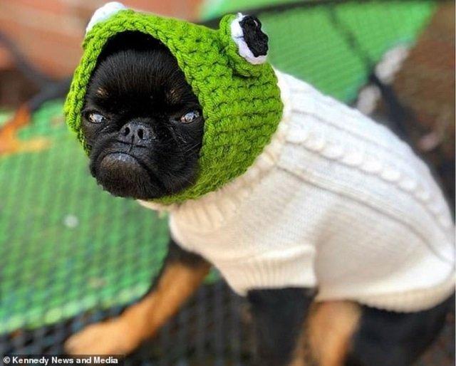 Мережу розвеселив найсуворіший пес у світі: кумедні фото - фото 383540