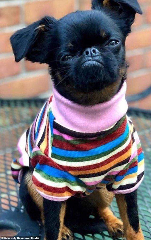Мережу розвеселив найсуворіший пес у світі: кумедні фото - фото 383542